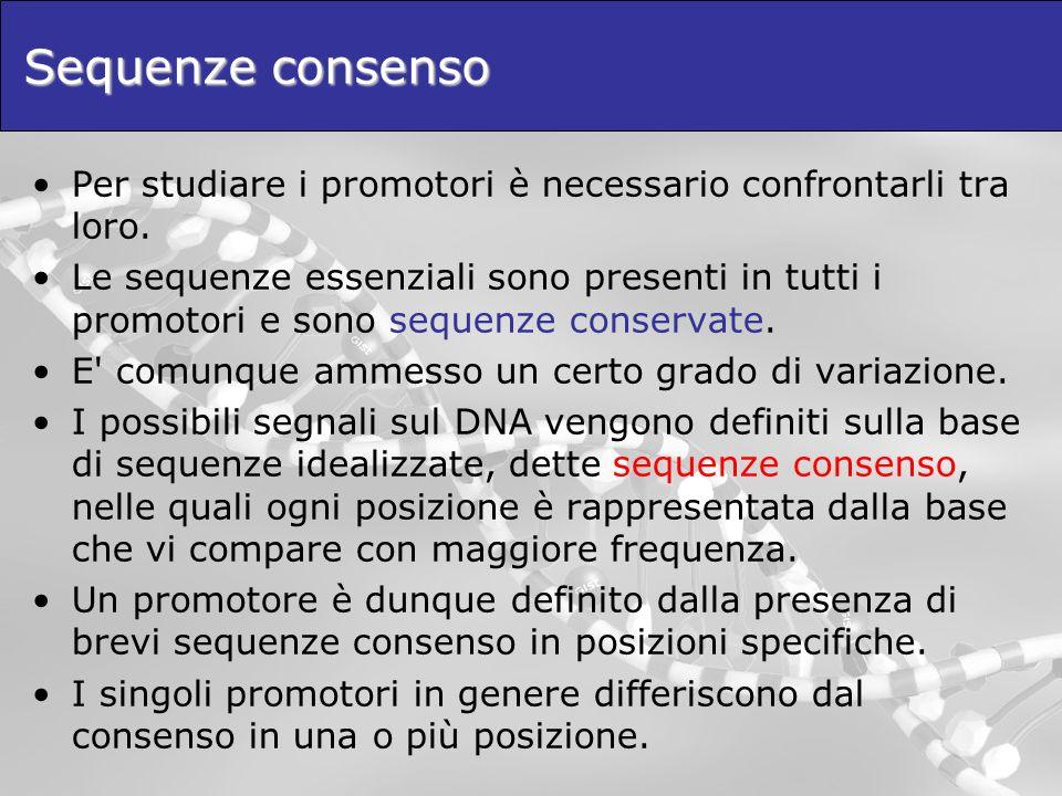 Sequenze consenso Per studiare i promotori è necessario confrontarli tra loro. Le sequenze essenziali sono presenti in tutti i promotori e sono sequen