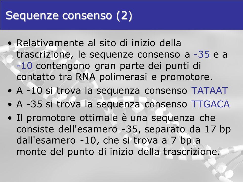 Sequenze consenso (2) Relativamente al sito di inizio della trascrizione, le sequenze consenso a -35 e a -10 contengono gran parte dei punti di contat