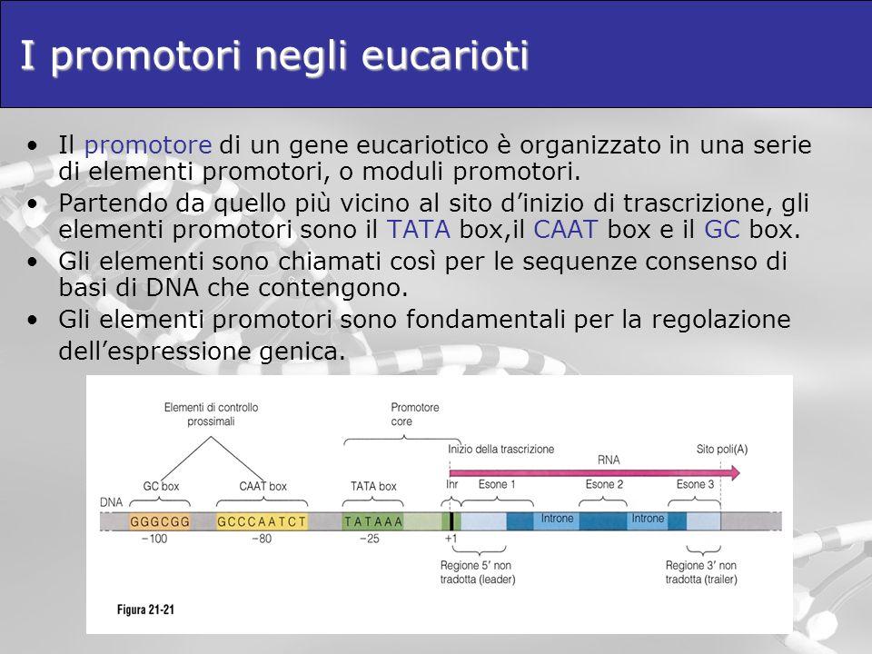 I promotori negli eucarioti Il promotore di un gene eucariotico è organizzato in una serie di elementi promotori, o moduli promotori. Partendo da quel