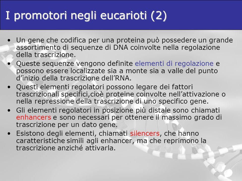 I promotori negli eucarioti (2) Un gene che codifica per una proteina può possedere un grande assortimento di sequenze di DNA coinvolte nella regolazi