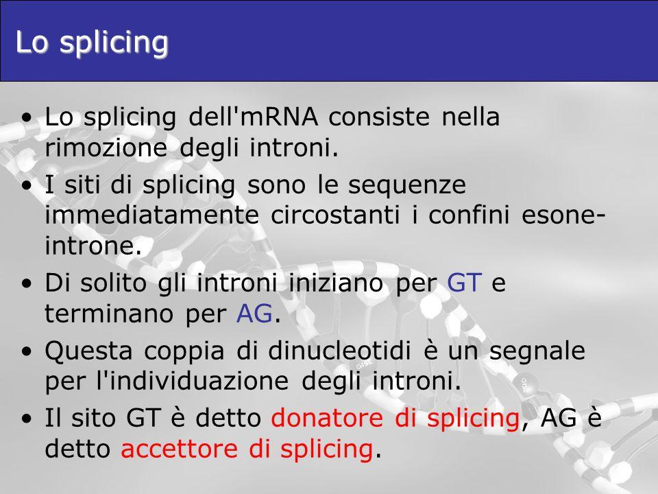 Lo splicing Lo splicing dell'mRNA consiste nella rimozione degli introni. I siti di splicing sono le sequenze immediatamente circostanti i confini eso