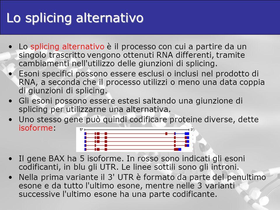 Lo splicing alternativo Lo splicing alternativo è il processo con cui a partire da un singolo trascritto vengono ottenuti RNA differenti, tramite camb