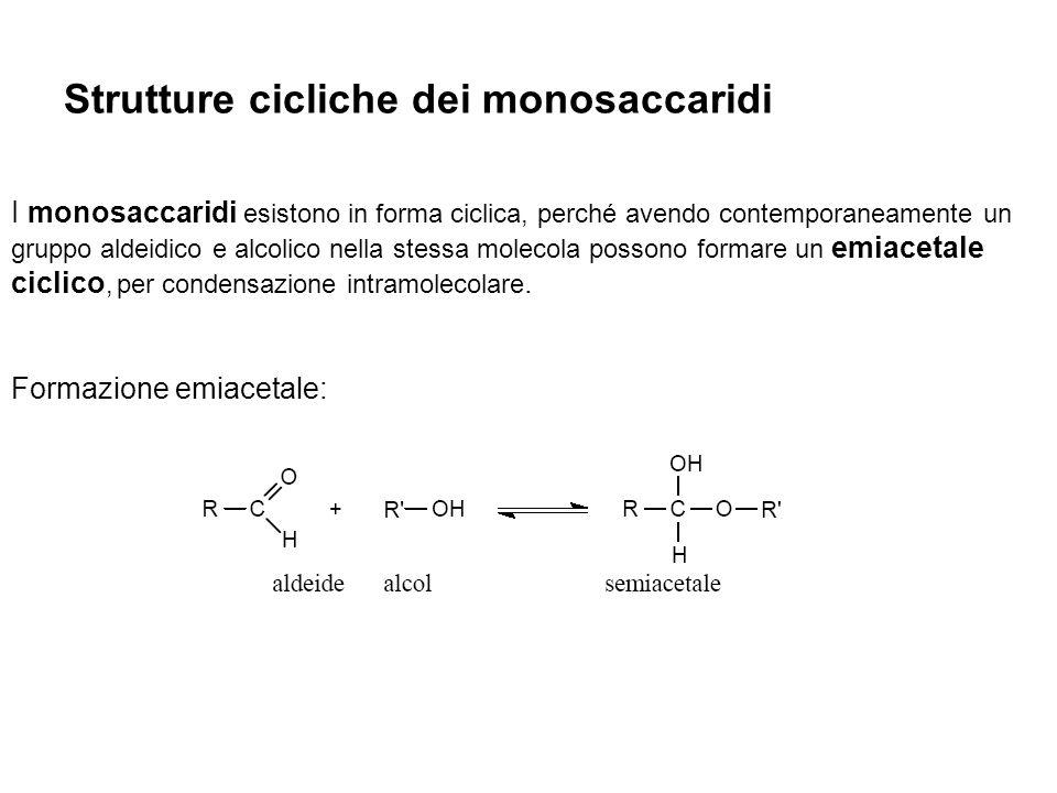 Strutture cicliche dei monosaccaridi I monosaccaridi esistono in forma ciclica, perché avendo contemporaneamente un gruppo aldeidico e alcolico nella