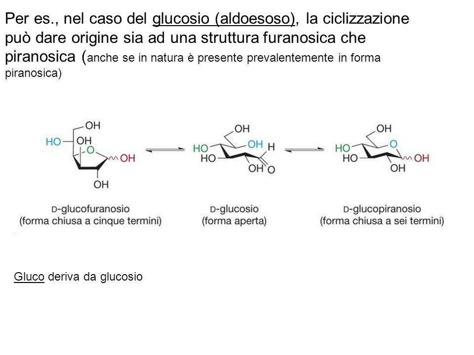 Per es., nel caso del glucosio (aldoesoso), la ciclizzazione può dare origine sia ad una struttura furanosica che piranosica ( anche se in natura è pr