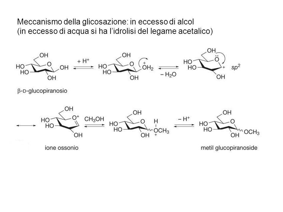 Meccanismo della glicosazione: in eccesso di alcol (in eccesso di acqua si ha lidrolisi del legame acetalico)