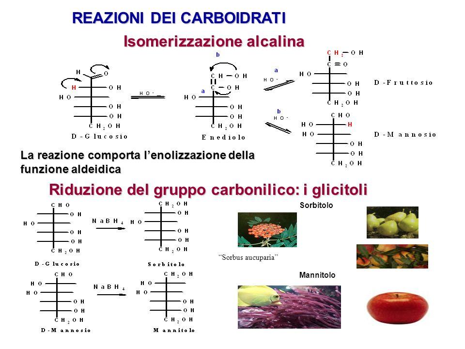 REAZIONI DEI CARBOIDRATI Isomerizzazione alcalina La reazione comporta lenolizzazione della funzione aldeidica Riduzione del gruppo carbonilico: i gli