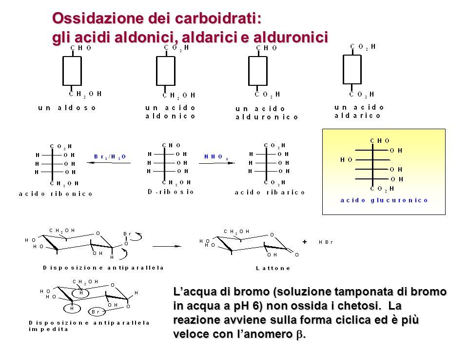 Ossidazione dei carboidrati: gli acidi aldonici, aldarici e alduronici Lacqua di bromo (soluzione tamponata di bromo in acqua a pH 6) non ossida i che
