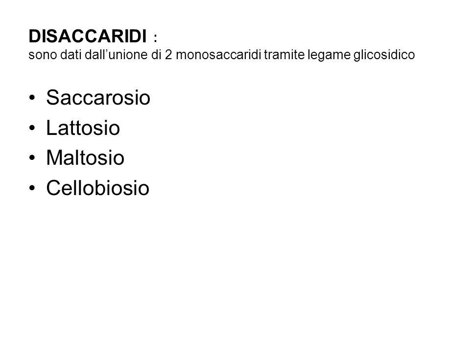 DISACCARIDI : sono dati dallunione di 2 monosaccaridi tramite legame glicosidico Saccarosio Lattosio Maltosio Cellobiosio