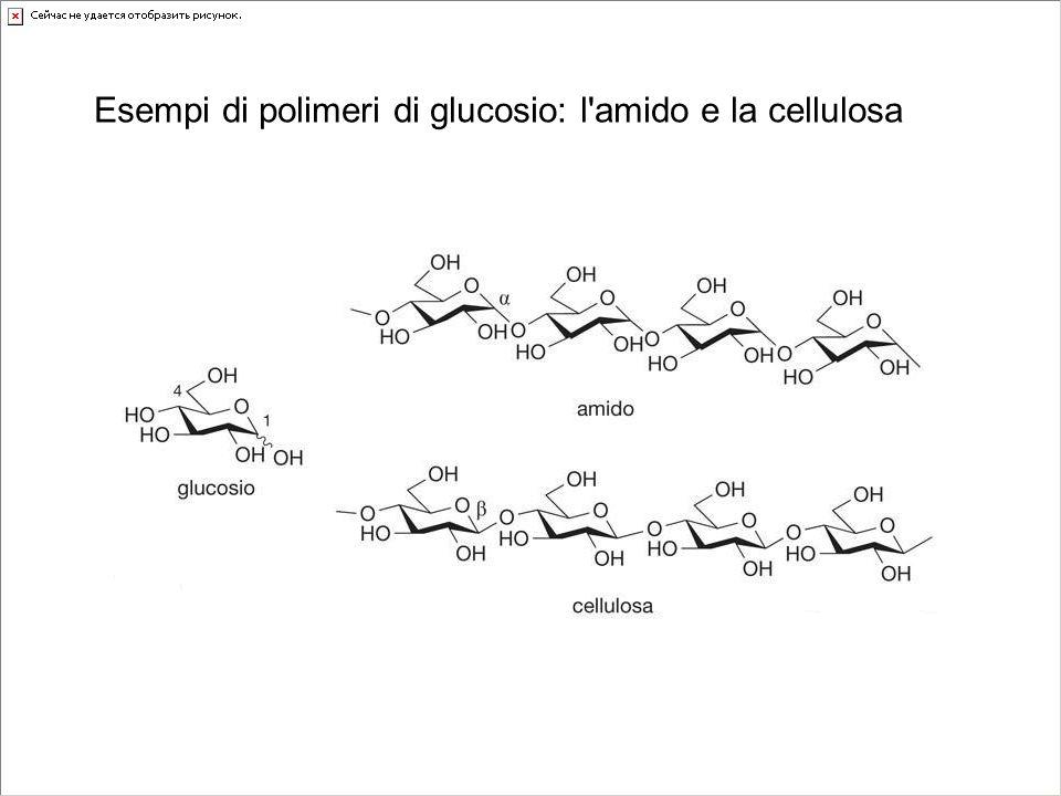 Esempi di polimeri di glucosio: l'amido e la cellulosa