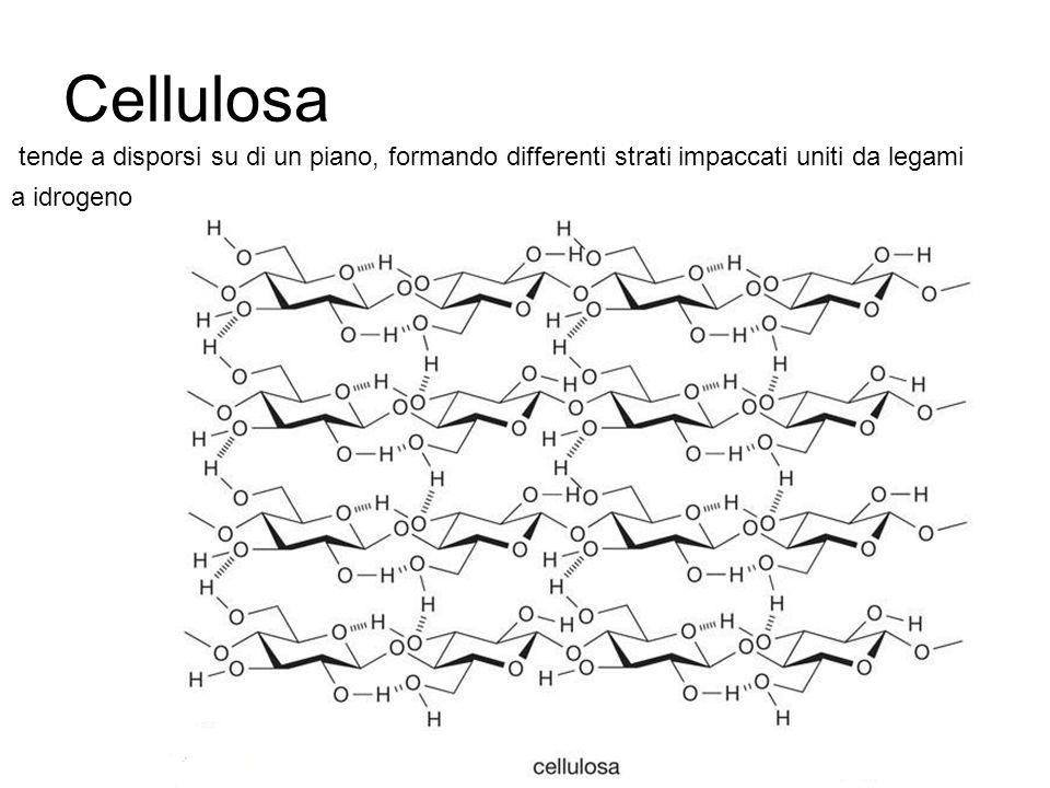 Cellulosa tende a disporsi su di un piano, formando differenti strati impaccati uniti da legami a idrogeno