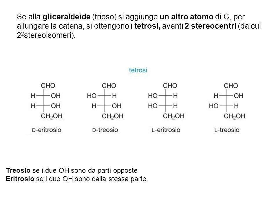 Se alla gliceraldeide (trioso) si aggiunge un altro atomo di C, per allungare la catena, si ottengono i tetrosi, aventi 2 stereocentri (da cui 2 2 ste