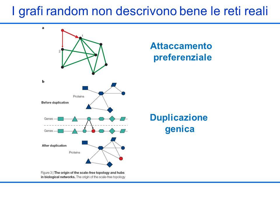 Attaccamento preferenziale Duplicazione genica I grafi random non descrivono bene le reti reali