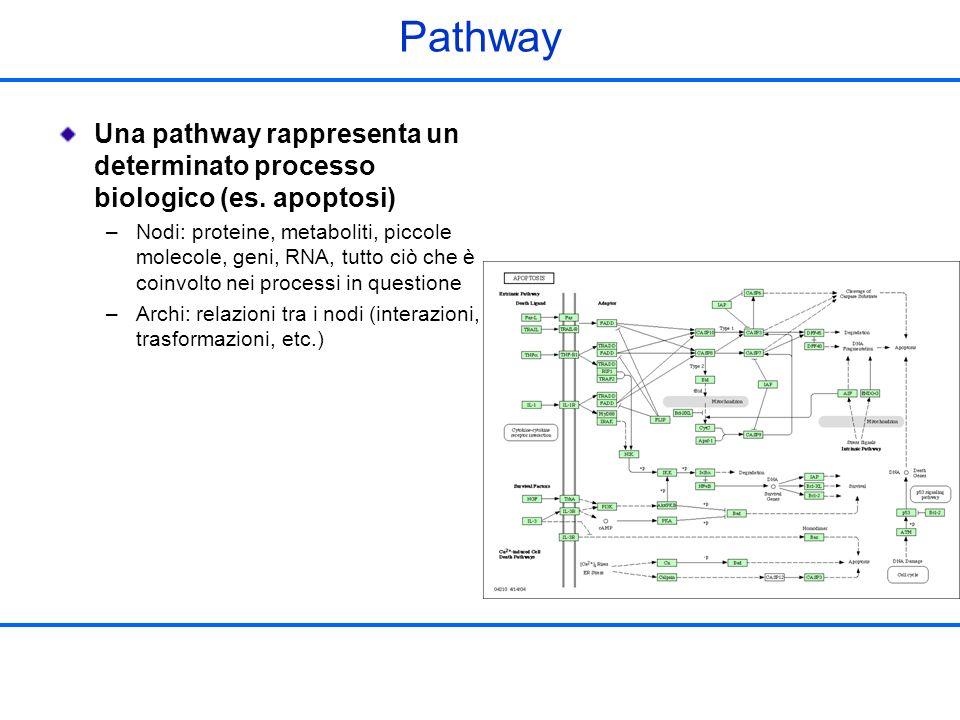 Pathway Una pathway rappresenta un determinato processo biologico (es. apoptosi) –Nodi: proteine, metaboliti, piccole molecole, geni, RNA, tutto ciò c