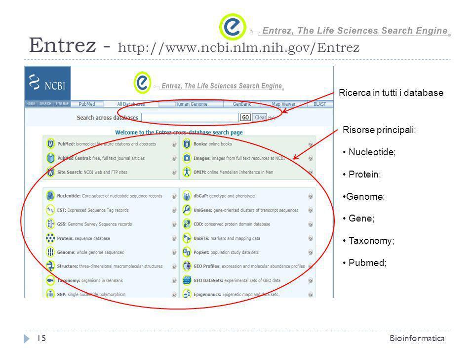 Entrez - http://www.ncbi.nlm.nih.gov/Entrez Bioinformatica15 Ricerca in tutti i database Risorse principali: Nucleotide; Protein; Genome; Gene; Taxono