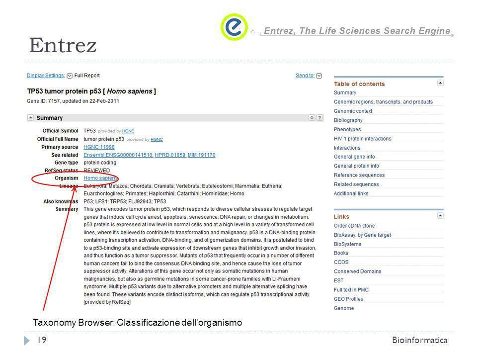 Entrez Bioinformatica19 Taxonomy Browser: Classificazione dellorganismo