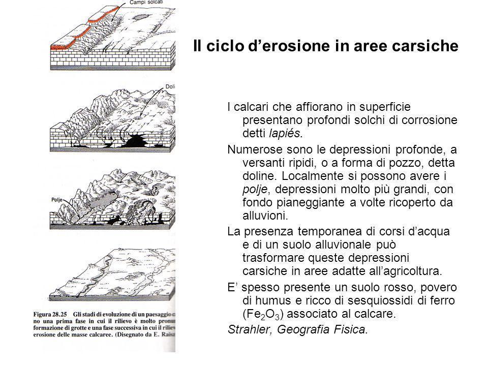 Il ciclo derosione in aree carsiche I calcari che affiorano in superficie presentano profondi solchi di corrosione detti lapiés.