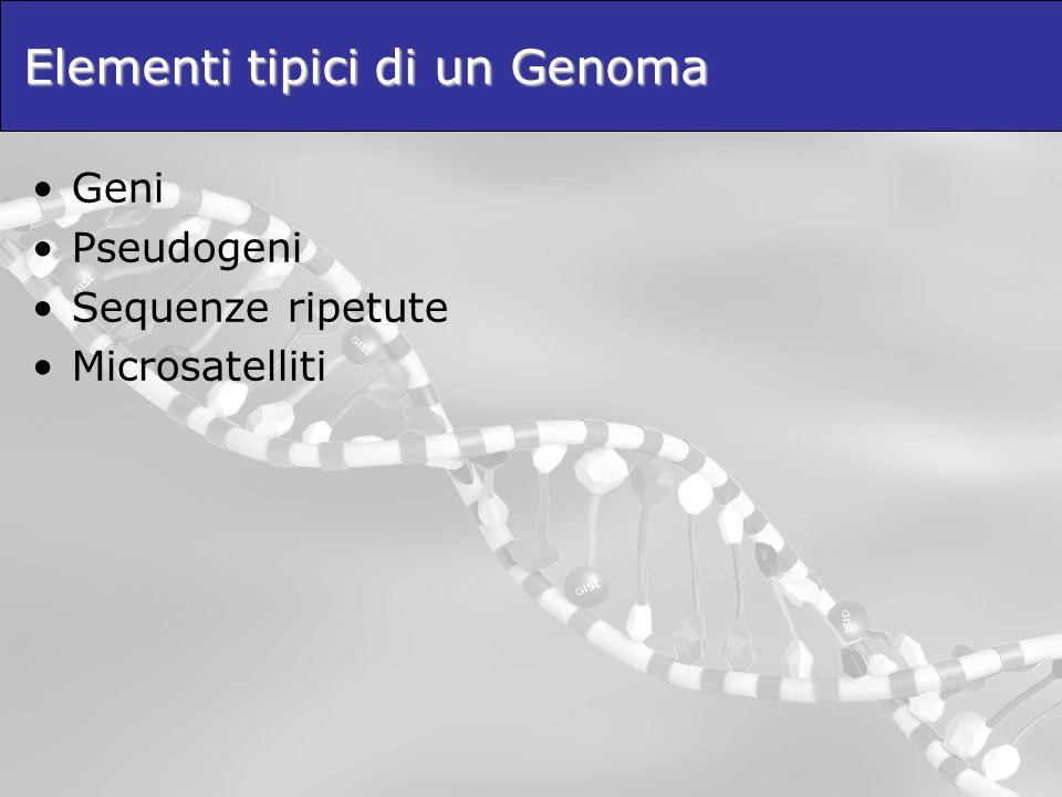 Elementi tipici di un Genoma Geni Pseudogeni Sequenze ripetute Microsatelliti