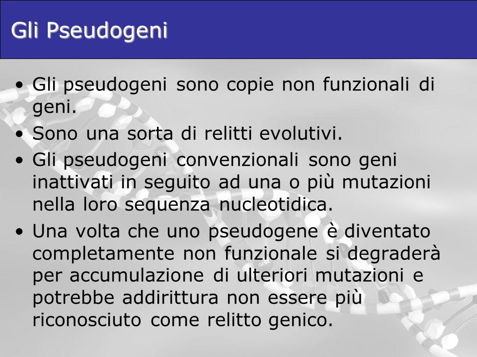 Gli Pseudogeni Gli pseudogeni sono copie non funzionali di geni. Sono una sorta di relitti evolutivi. Gli pseudogeni convenzionali sono geni inattivat