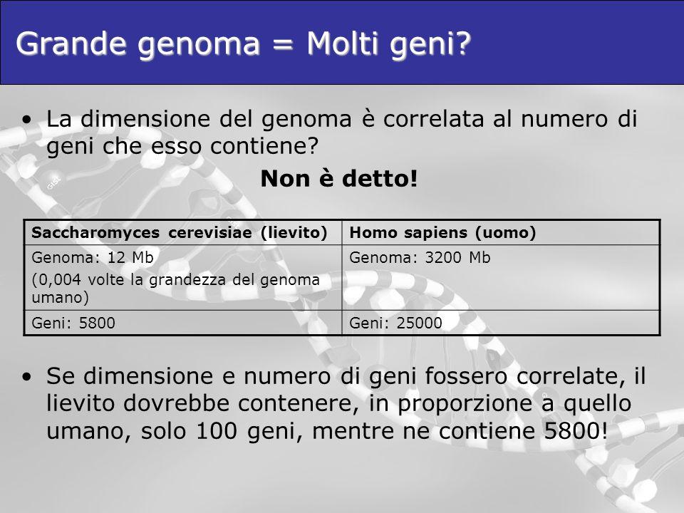 Grande genoma = Molti geni? La dimensione del genoma è correlata al numero di geni che esso contiene? Non è detto! Se dimensione e numero di geni foss