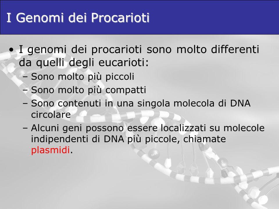 I Genomi dei Procarioti I genomi dei procarioti sono molto differenti da quelli degli eucarioti: –Sono molto più piccoli –Sono molto più compatti –Son