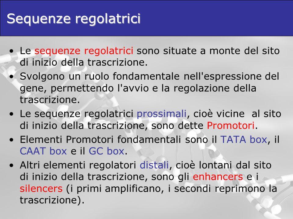 Sequenze regolatrici Le sequenze regolatrici sono situate a monte del sito di inizio della trascrizione. Svolgono un ruolo fondamentale nell'espressio