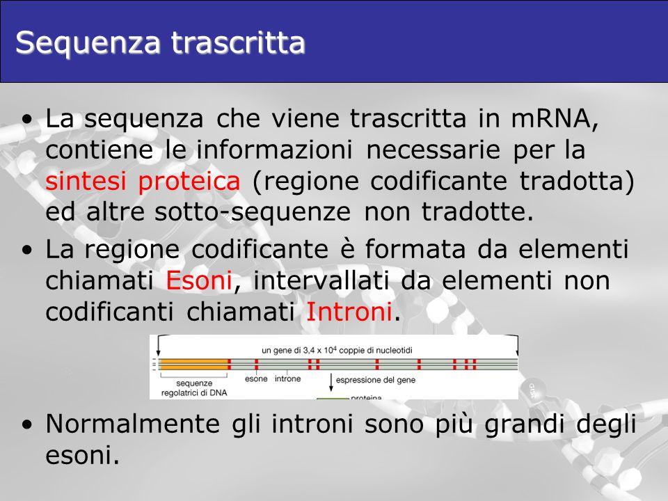 Sequenza trascritta La sequenza che viene trascritta in mRNA, contiene le informazioni necessarie per la sintesi proteica (regione codificante tradott