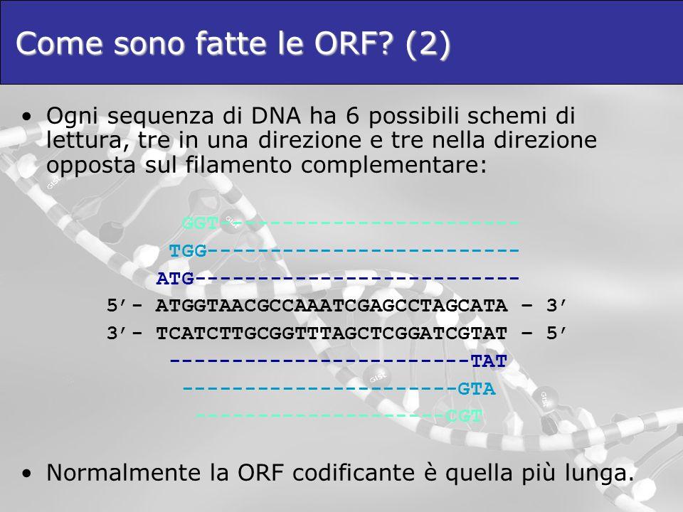 Come sono fatte le ORF? (2) Ogni sequenza di DNA ha 6 possibili schemi di lettura, tre in una direzione e tre nella direzione opposta sul filamento co