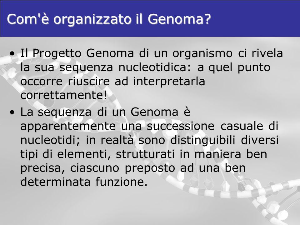 Com'è organizzato il Genoma? Il Progetto Genoma di un organismo ci rivela la sua sequenza nucleotidica: a quel punto occorre riuscire ad interpretarla