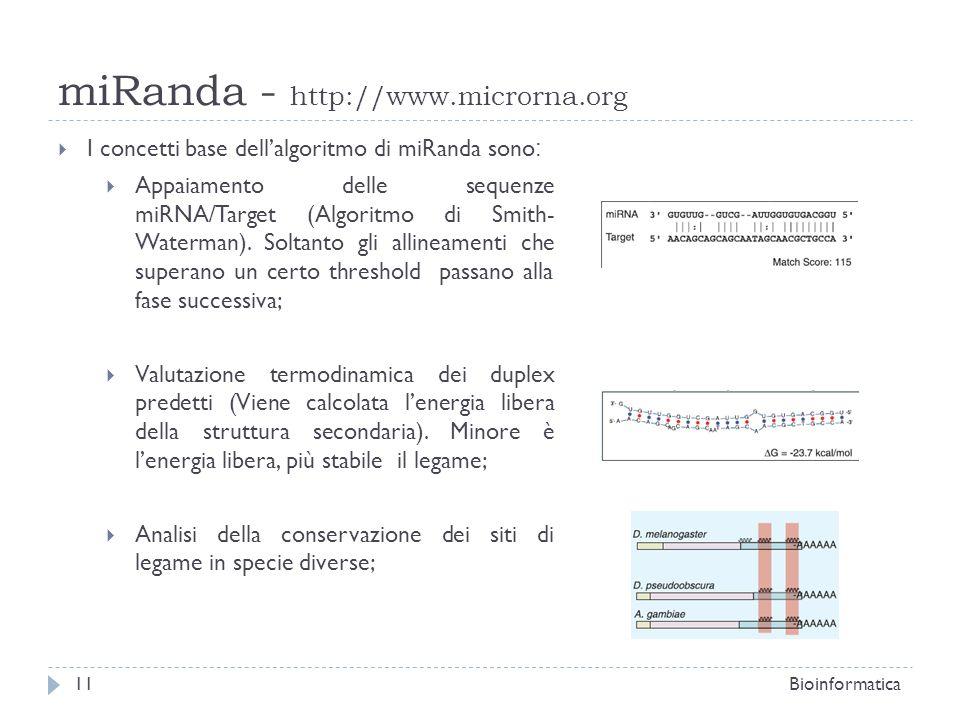 miRanda - http://www.microrna.org Bioinformatica11 I concetti base dellalgoritmo di miRanda sono : Appaiamento delle sequenze miRNA/Target (Algoritmo