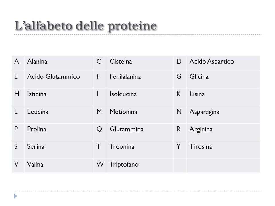 Lalfabeto delle proteine AAlaninaCCisteinaDAcido Aspartico EAcido GlutammicoFFenilalaninaGGlicina HIstidinaIIsoleucinaKLisina LLeucinaMMetioninaNAspar
