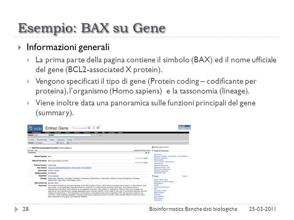 Esempio: BAX su Gene Informazioni generali La prima parte della pagina contiene il simbolo (BAX) ed il nome ufficiale del gene (BCL2-associated X prot