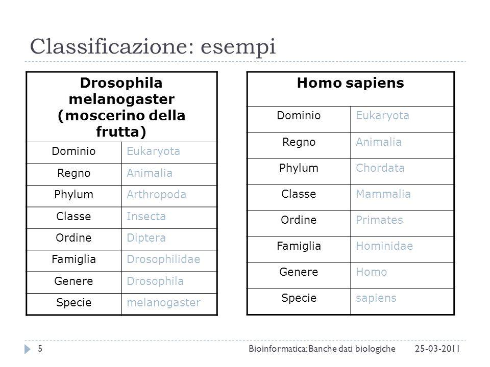 Classificazione: esempi Drosophila melanogaster (moscerino della frutta) DominioEukaryota RegnoAnimalia PhylumArthropoda ClasseInsecta OrdineDiptera F
