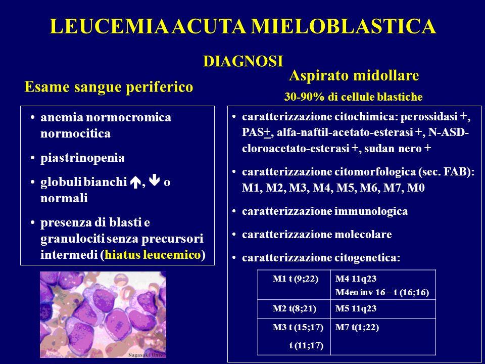 LEUCEMIA ACUTA MIELOBLASTICA Esame sangue periferico DIAGNOSI anemia normocromica normocitica piastrinopenia globuli bianchi, o normali presenza di bl