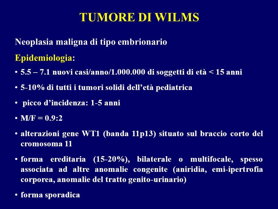 TUMORE DI WILMS Neoplasia maligna di tipo embrionario 5.5 – 7.1 nuovi casi/anno/1.000.000 di soggetti di età < 15 anni 5-10% di tutti i tumori solidi