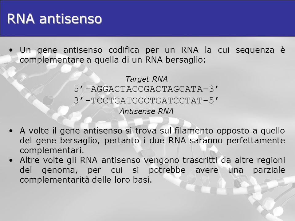 RNA antisenso Un gene antisenso codifica per un RNA la cui sequenza è complementare a quella di un RNA bersaglio: Target RNA 5-AGGACTACCGACTAGCATA-3 3