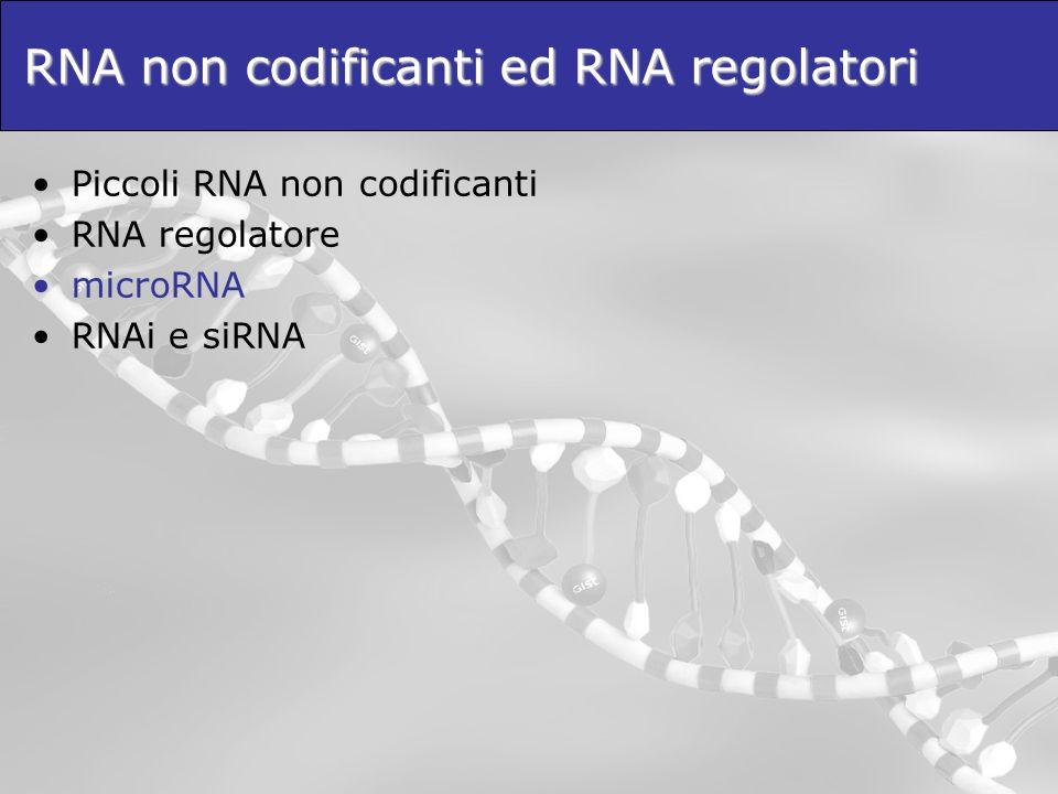 RNA non codificanti ed RNA regolatori Piccoli RNA non codificanti RNA regolatore microRNA RNAi e siRNA