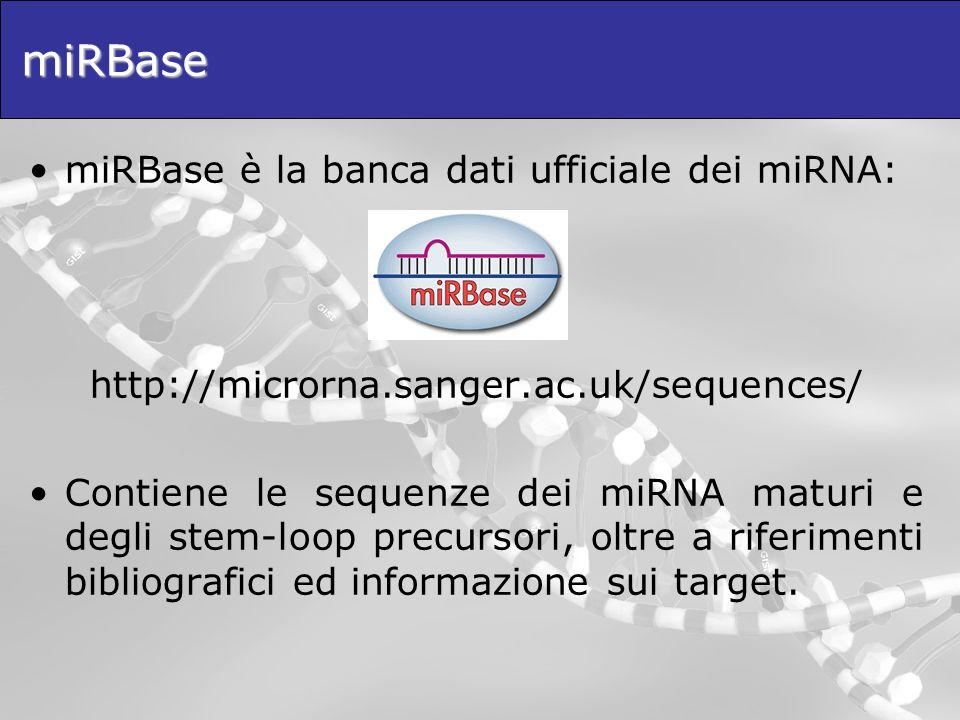miRBase miRBase è la banca dati ufficiale dei miRNA: http://microrna.sanger.ac.uk/sequences/ Contiene le sequenze dei miRNA maturi e degli stem-loop p