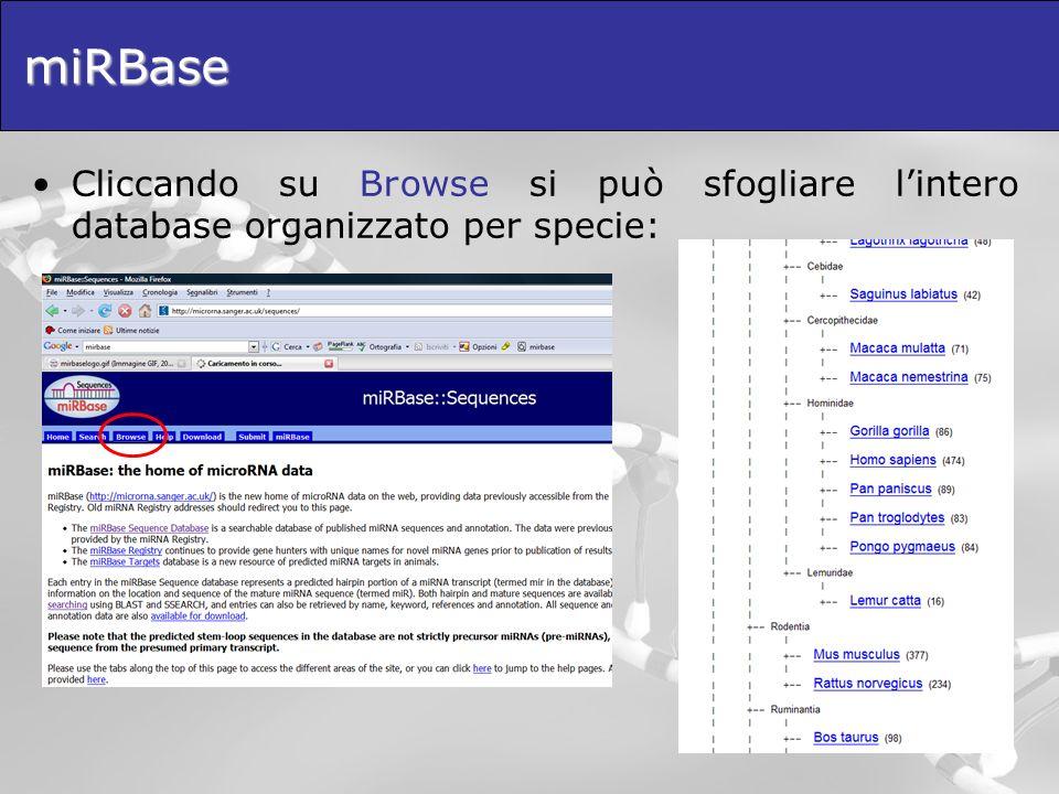 miRBase Cliccando su Browse si può sfogliare lintero database organizzato per specie: