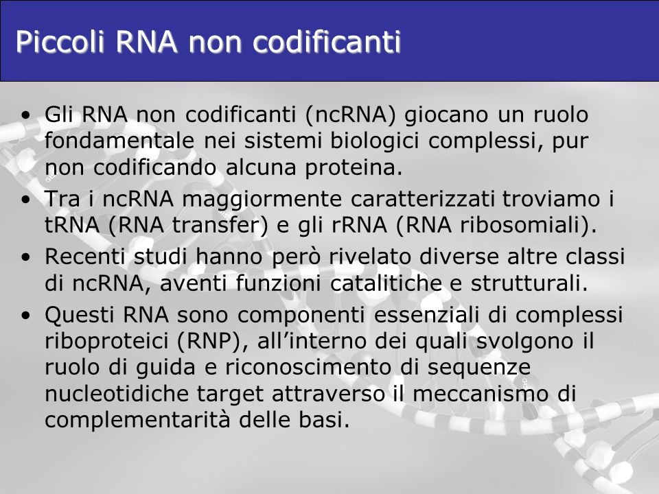 I geni miRNA I geni miRNA hanno sequenze tali da generare trascritti di RNA con struttura a forcina (hairpin): loop GGCCUGUUCCCCGAGACUAUUGAUCUCGGGGAACAGGCC CUA GGCCUGUUCCCCGAGA A CCGGACAAGGGGCUCU A UGA Si parla di strutture di tipo STEM-LOOP.