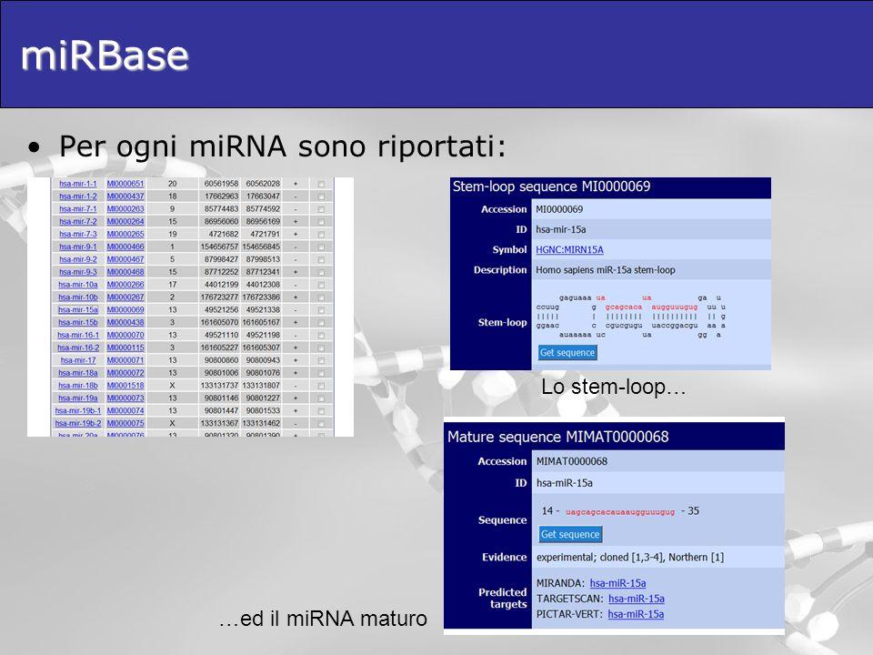 miRBase Per ogni miRNA sono riportati: Lo stem-loop… …ed il miRNA maturo