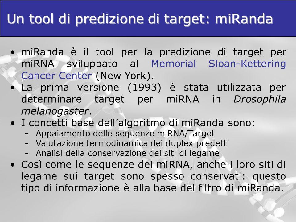 Un tool di predizione di target: miRanda miRanda è il tool per la predizione di target per miRNA sviluppato al Memorial Sloan-Kettering Cancer Center
