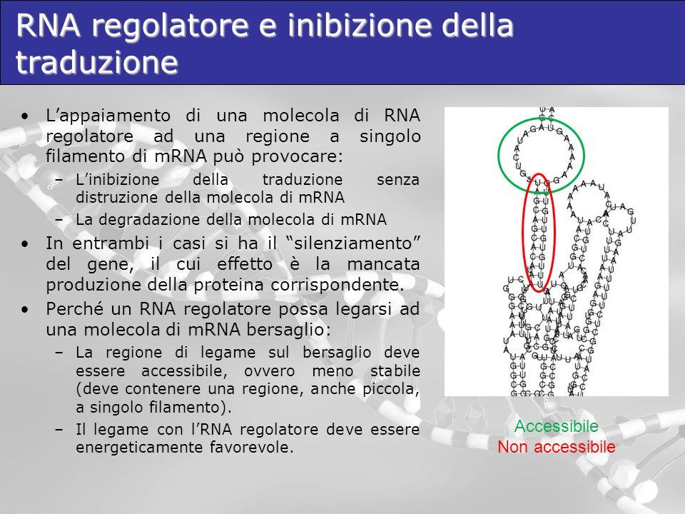siRNA ed RNA Interference I siRNA sono le principali molecole utilizzate nellRNA Interference (RNAi) artificiale.