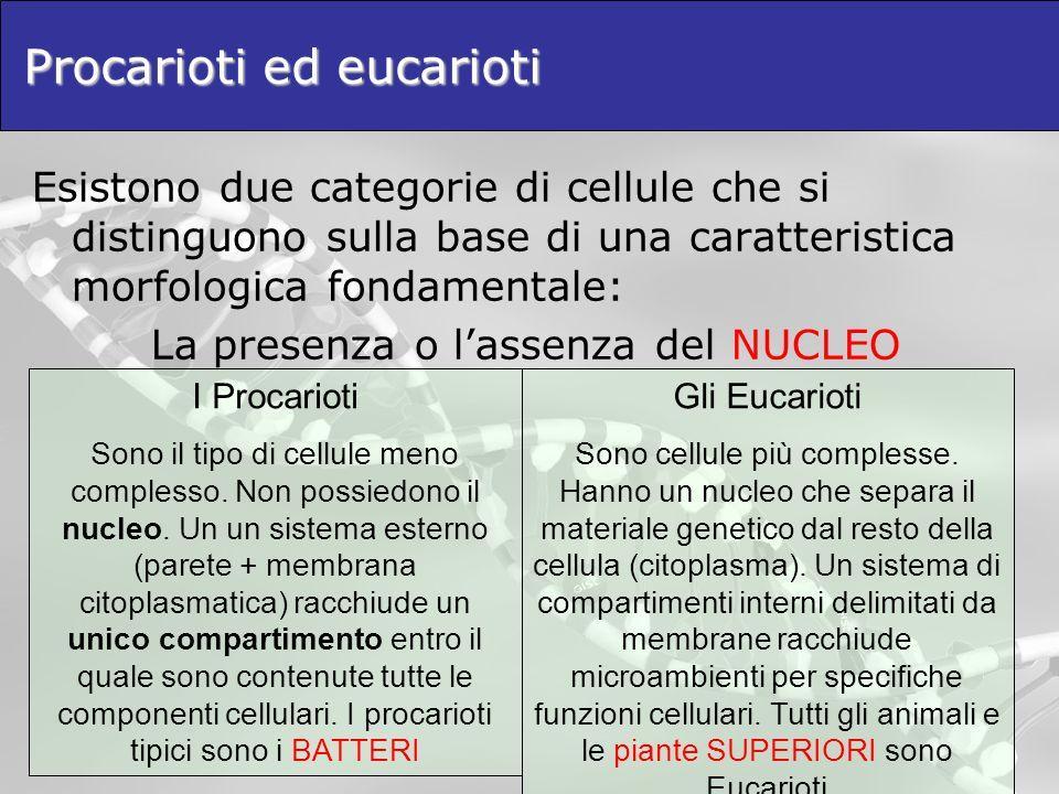 Procarioti ed eucarioti Esistono due categorie di cellule che si distinguono sulla base di una caratteristica morfologica fondamentale: La presenza o