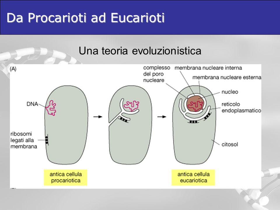 Da Procarioti ad Eucarioti Una teoria evoluzionistica