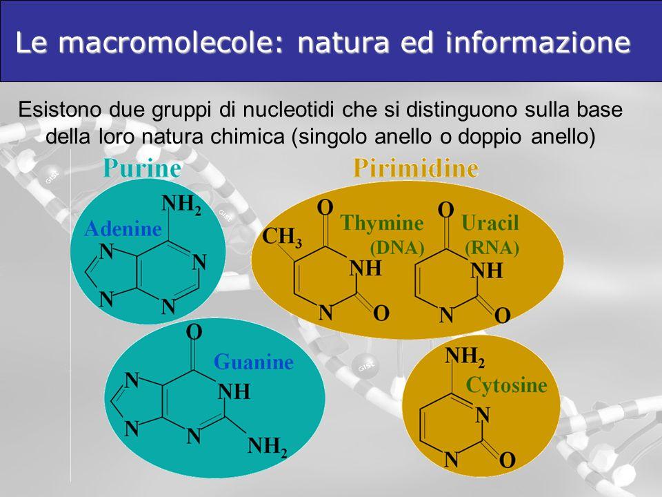 Le macromolecole: natura ed informazione Esistono due gruppi di nucleotidi che si distinguono sulla base della loro natura chimica (singolo anello o d
