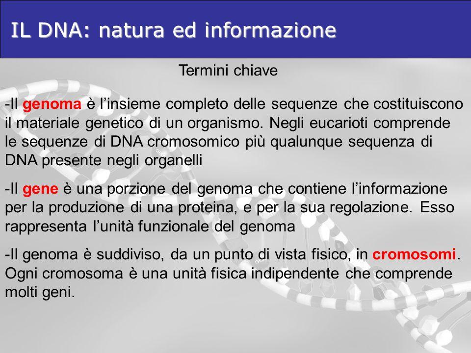 IL DNA: natura ed informazione Termini chiave -Il genoma è linsieme completo delle sequenze che costituiscono il materiale genetico di un organismo. N