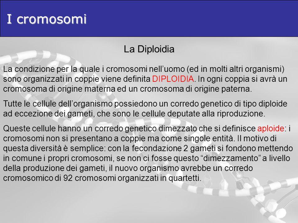I cromosomi La Diploidia La condizione per la quale i cromosomi nelluomo (ed in molti altri organismi) sono organizzati in coppie viene definita DIPLO