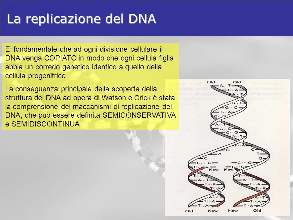 La replicazione del DNA E fondamentale che ad ogni divisione cellulare il DNA venga COPIATO in modo che ogni cellula figlia abbia un corredo genetico