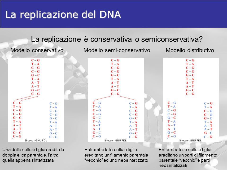 La replicazione del DNA La replicazione è conservativa o semiconservativa? Modello conservativoModello semi-conservativoModello distributivo Una delle