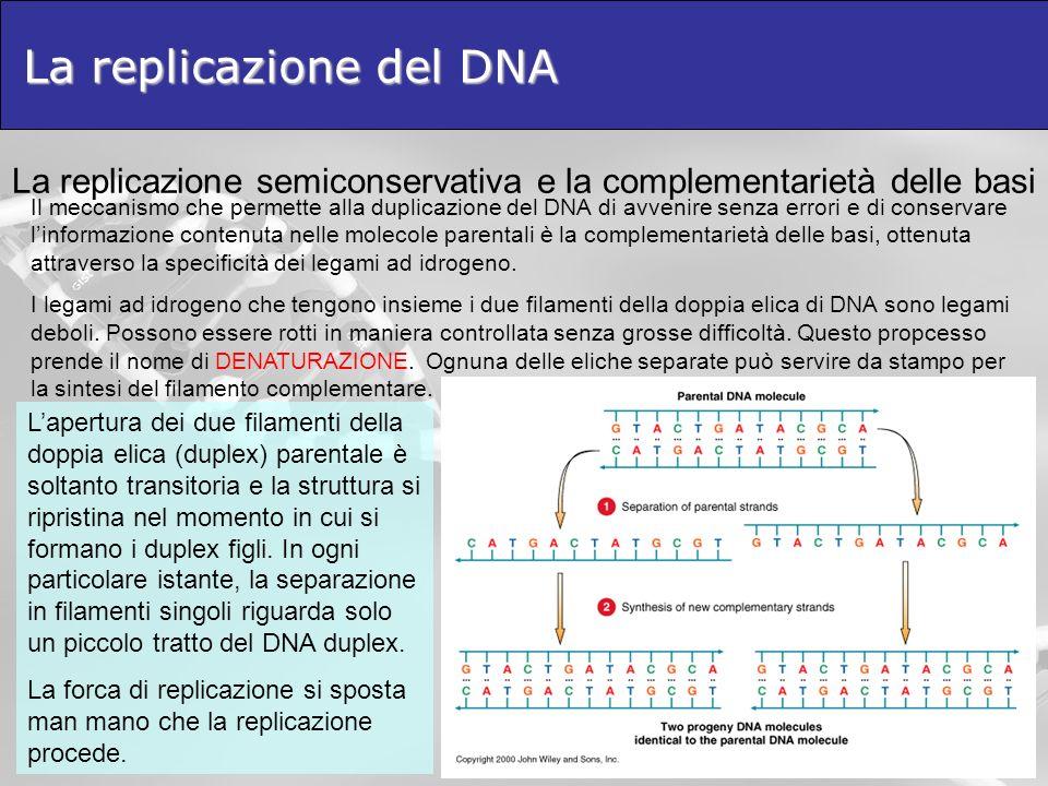 La replicazione del DNA La replicazione semiconservativa e la complementarietà delle basi Il meccanismo che permette alla duplicazione del DNA di avve